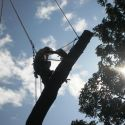 silhouette of Elm being dismantled