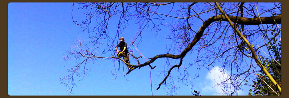 Tree Surgeon, Inverness, Elgin, Nairn, Forres